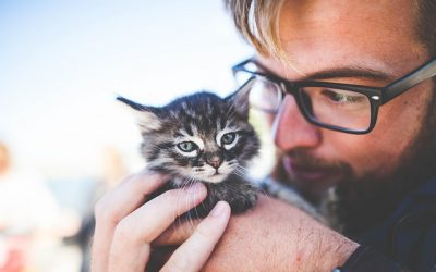The most vital information you need to know before adopting a cat